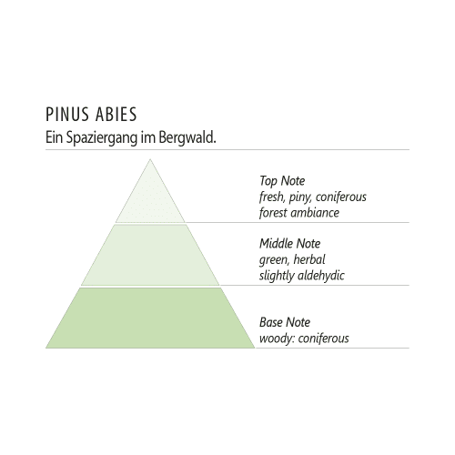 Duftpyramide Pinus Abies