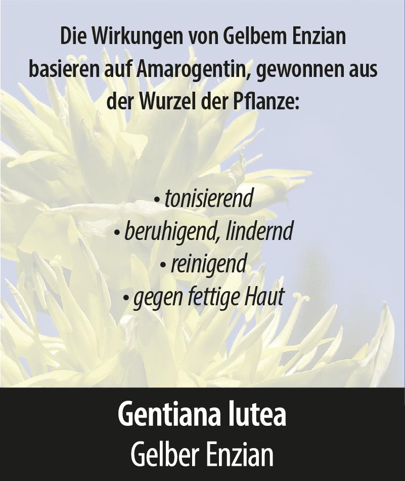 Gentiana Lutea